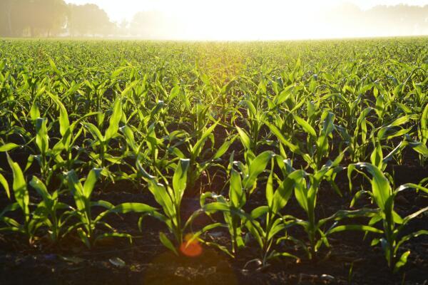Biologischer Anbau ohne Gentechnik -