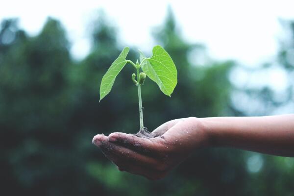 Warum ist Bio gesünder? -